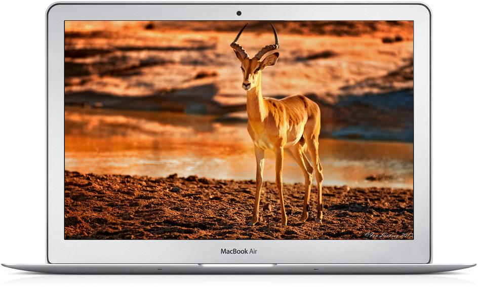 """купить Apple MacBook Air 13"""" Z0P00003A в Киеве."""